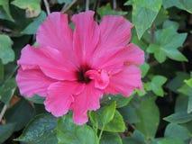 Härlig purpurfärgad tropisk blomma Arkivfoto