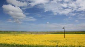 Härlig qinghai sjö - blå himmel och vit fördunklar, och den blommande rapsfröt blommar Arkivfoto