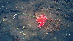 Härlig röd blomma Fotografering för Bildbyråer