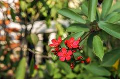 Härlig röd blomma Arkivfoto