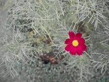 Härlig röd blomma i trädgården arkivfoton