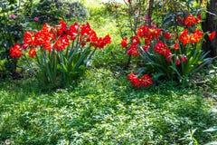 Härlig röd blomma med grönt gräs på jordningen Royaltyfria Bilder
