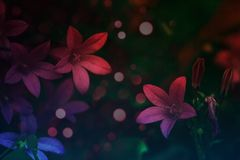 Härlig röd blomma och kronblad arkivbilder