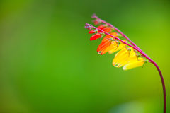 Härlig röd blomma på bakgrundsbild Arkivfoto