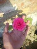 härlig röd färgad blomma royaltyfria bilder