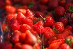Härlig röd jordgubbe Fotografering för Bildbyråer