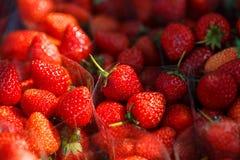 Härlig röd jordgubbe med sidor i en plast- packe Royaltyfri Fotografi