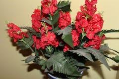 Härlig röd lös blomma för inomhus garnering Royaltyfri Foto