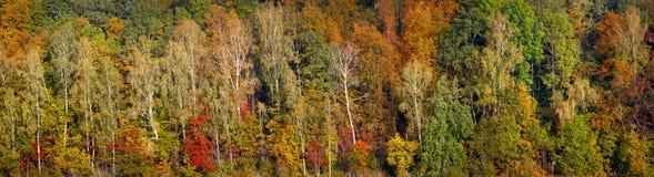 Härlig röd och grön höstskog för apelsin, många träd på den orange kullepanoraman Baner för rengöringsduk för panorama för höstba royaltyfri bild