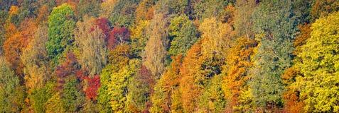 Härlig röd och grön höstskog för apelsin, många träd på den orange kullepanoraman Lång panorama för höstbakgrund arkivfoton