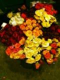 Härlig röd ros Chittagong arkivbild