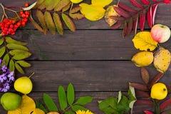 Härlig ram av färgrika höstsidor, frukter och blommor på brun träbakgrund, bästa sikt royaltyfri fotografi