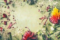 Härlig ram för sommarträdgårdblommor på grön bakgrund royaltyfri fotografi