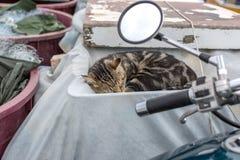 Härlig randig katt som sover i gammal fiskebåt town för st för rovinj för domkyrkacroatia euphemia gammal royaltyfria bilder