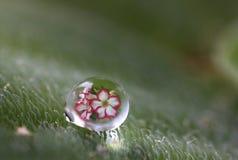 Härlig reflex av blomman i vattendroppe arkivbild