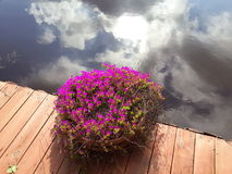 härlig reflexion Royaltyfri Fotografi