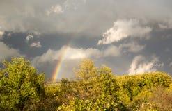 Härlig regnbåge över träd royaltyfria foton