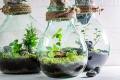Härlig regnskog i en krus som nytt livbegrepp Arkivfoto