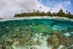 Härlig rev i grunt vatten av Solomon Islands arkivfoton