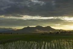 Härlig ricefield Royaltyfri Bild