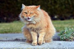 Härlig rolig katt royaltyfri foto