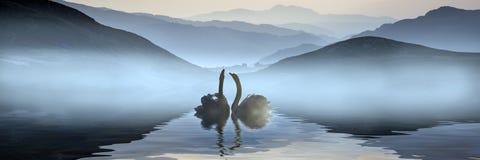 Härlig romantisk bild av svanar på den dimmiga sjön med berg I arkivfoto