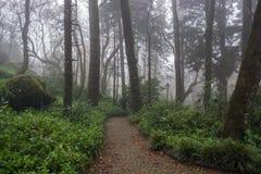 Härlig romantisk felik skog i dimma arkivbilder