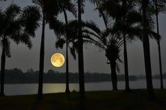 Härlig romantisk fullmåne med palmträd i den tidiga aftonen arkivfoton