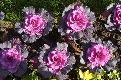 3 Härlig rosa blommablom i vinter Arkivbild
