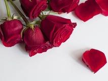 Härlig rosa bukett Royaltyfri Foto