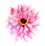 Härlig rosa färgblomma Arkivbild