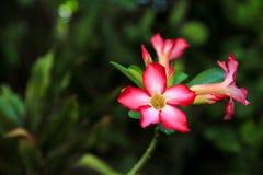Härlig rosa färgblomma i parkera Royaltyfria Bilder