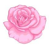 Härlig rosa färgros som isoleras på vit bakgrund vektor illustrationer