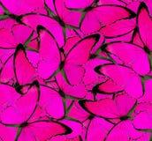 Härlig rosa fjärilsbakgrundstextur Arkivbild