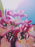 Härlig rosa inflorescence Arkivfoton