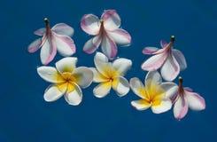 Härlig rosa inflorescence arkivfoto