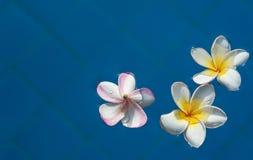 Härlig rosa inflorescence arkivbilder
