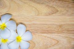 Härlig rosa inflorescence Arkivbild