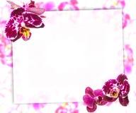 Härlig rosa orkidégräns för hälsningkort eller älskvärd blommaram Royaltyfria Foton