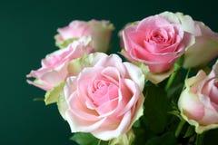 Härlig rosa rosnärbild Arkivfoton