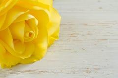 härlig roseyellow Royaltyfri Fotografi