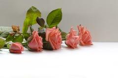 Härlig säsong för blomma på våren royaltyfri fotografi
