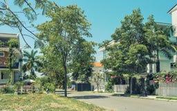Härlig södra gata med trädblommor royaltyfri foto