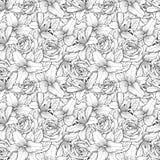 Härlig sömlös bakgrund med den svartvita liljan och rosor Hand-drog konturlinjer och slaglängder Royaltyfria Bilder