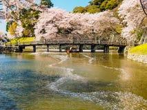 Härlig Sakura blomning i Hikone, Japan 4 Royaltyfri Fotografi