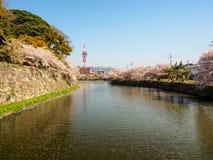 Härlig Sakura blomning i Hikone, Japan 3 Royaltyfri Bild
