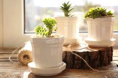 Härlig sammansättning av houseplants Royaltyfria Bilder