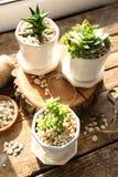 Härlig sammansättning av houseplants på trätabellen Arkivfoton