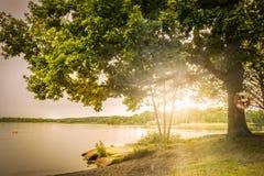 Härlig scandinavian sommarsolnedgång bak en stor ek arkivfoto