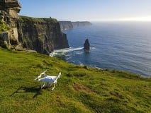 Härlig scenisk flyg- surrsikt av Irland klippor av Moher i ståndsmässiga Clare, Irland arkivbilder